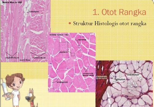 struktur histologi jar otot