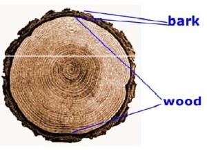 bagian utama batang