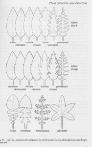 macam-macam tepi daun